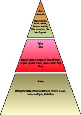 Olfactory Pyramid Nuàvia Blu