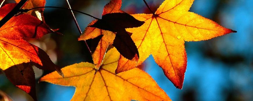 Autumn Madness
